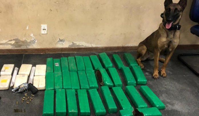 Drogas encontradas por cão farejador em ação da Polícia Militar em Feira de Santana