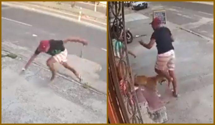 Assaltante tropeça, é mordido por cachorro e desiste de roubo